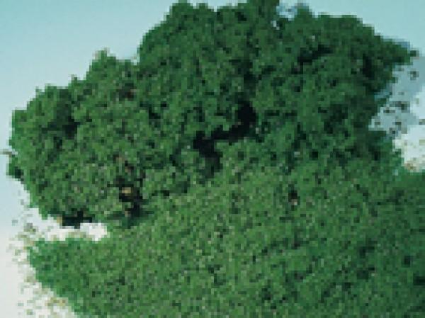 Auhagen 76681 H0/TT/N/0/G 1000ml-Moosschaum, laubgrün (fein)